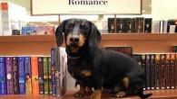 crusoe-celebrity-dachshund 4